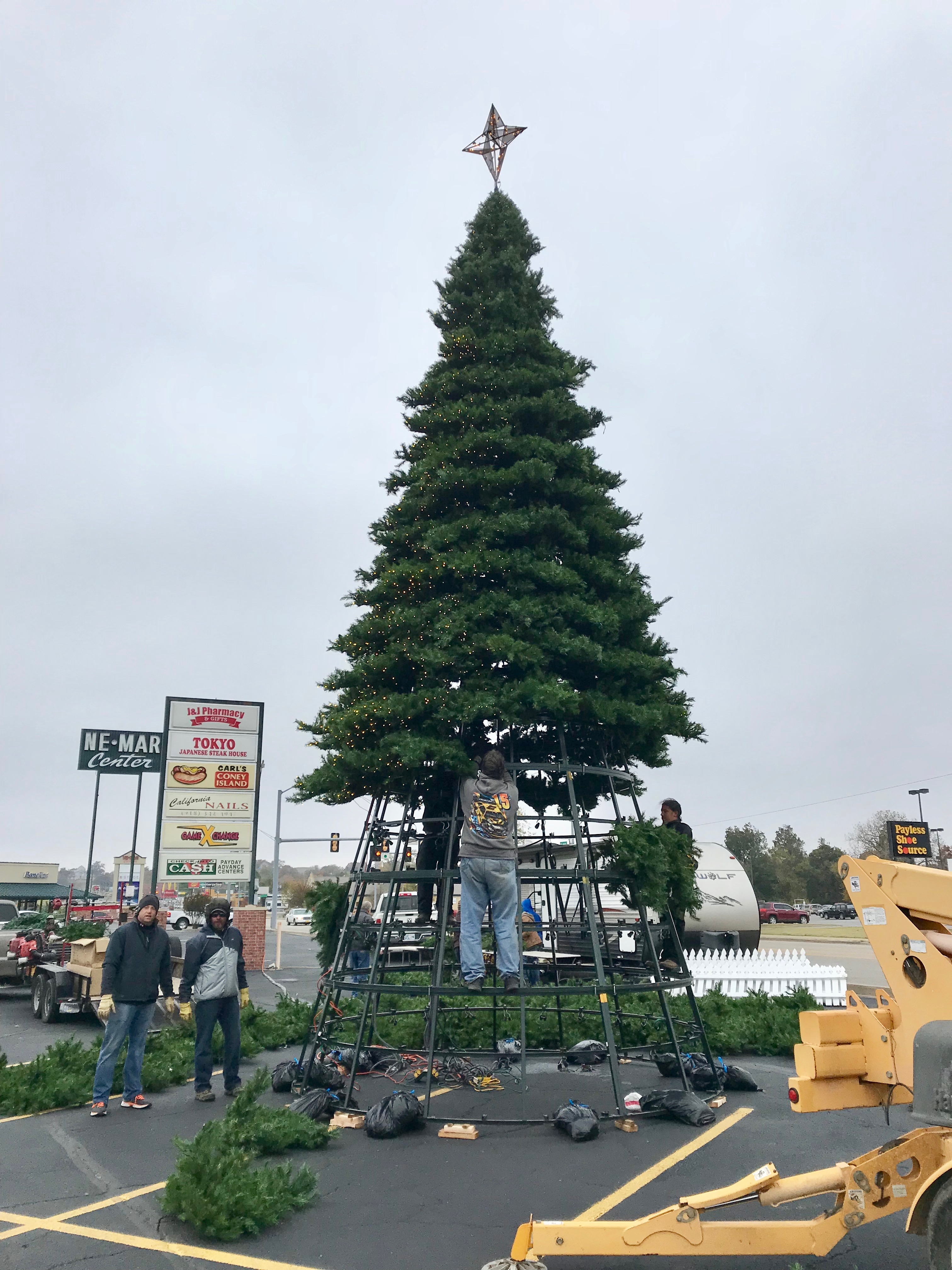 NEMAR Tree 2017