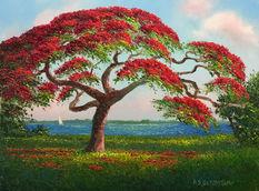 Poinciana Tree.JPG