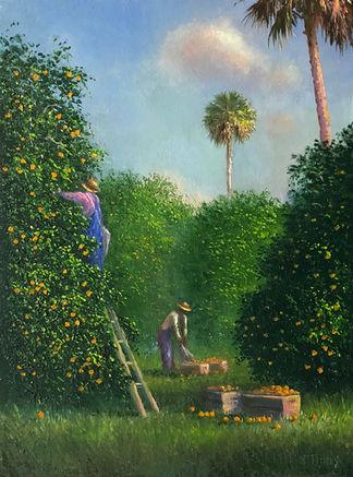 Old Florida Orange Groves.jpg