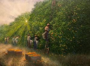 Sunray Orange Pickers.jpeg