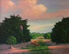 Florida Orange Groves.JPG