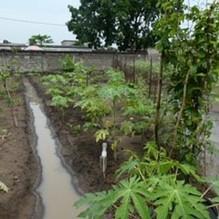 irrigation4.jpg