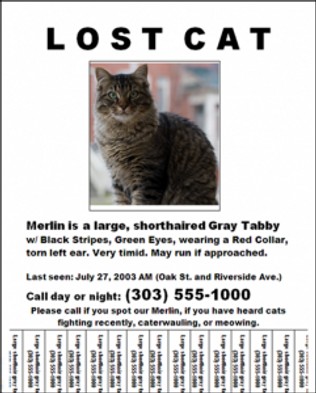 lost_cat-241x300.png