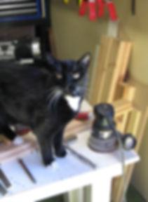 workshop cat.jpg