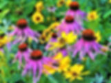 Pollinator-friendly flowers in a garden