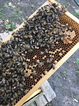 Bienen 2.jpeg