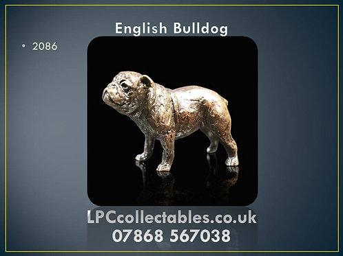 2086 English Bulldog