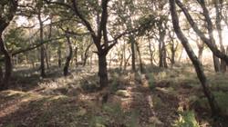 Woodland DCC