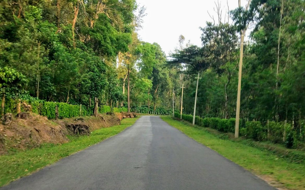Winding roads through the coffee plantations in Siddapura