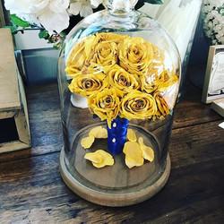 #yellowrose #beautyandthebeast #petals #