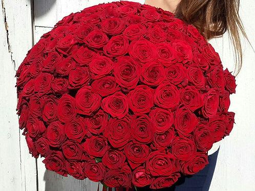 Rožu bumba (101 roze)