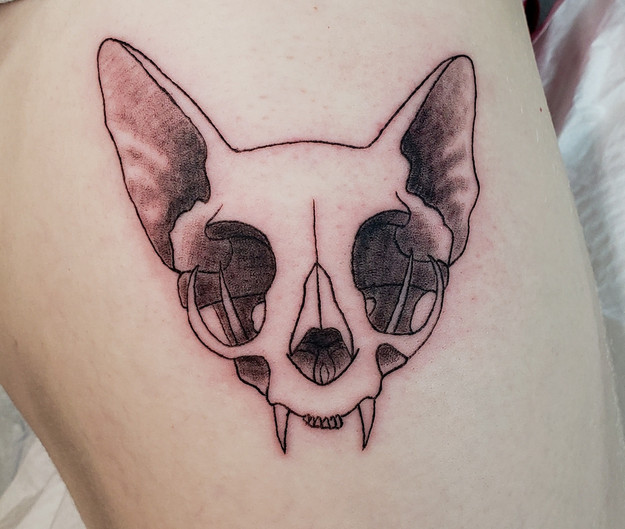 Cat Skull with Ears