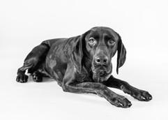 Bradford Pet Photographer
