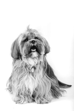 Pet Photograher