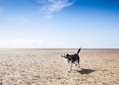 Pet Photography Yorkshire
