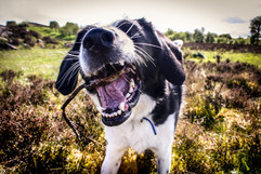 Pet Photography Keighley