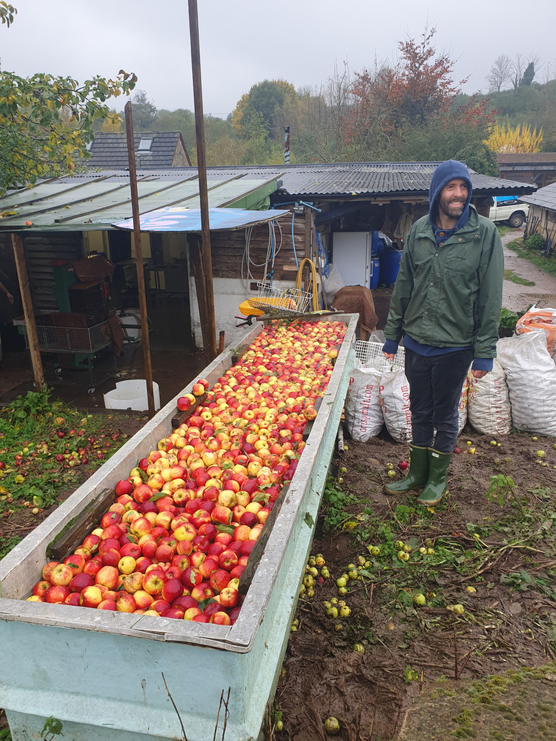 Fresh apple juice from the farmer