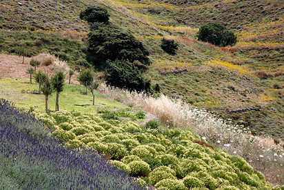 Oliaros development. Antiparos, Greece. Landscape design by doxiadis+