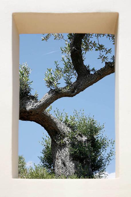 Ermioni, Greece. Landscape design by doxiadis+