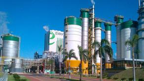 Após aquisição, Paper Excellence deve investir R$ 31 bilhões na Eldorado Brasil