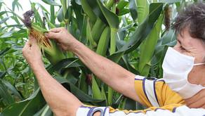 Projeto agrícola parceiro da CENIBRA produz 100 ton de alimentos por ano