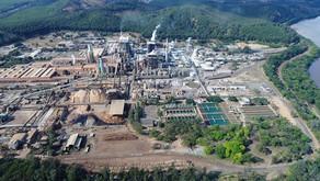 Cenibra é autorizada a comprar terras em Minas Gerais