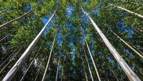 Setor de árvores cultivadas brasileiro mantém ritmo de produção acelerado no 2º trimestre de 2021