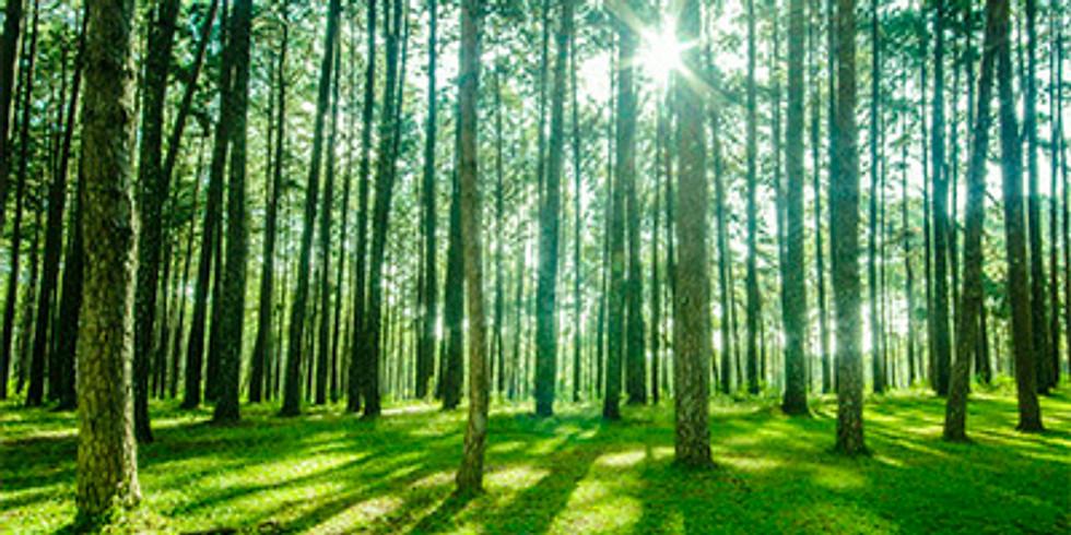 Curso Básico da Floresta ao Produto Acabado | ABTCP