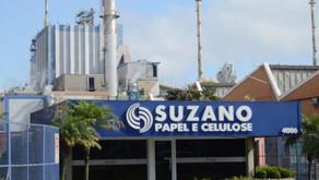 Nova rodada de aumentos no preço da celulose eleva atratividade para Suzano e Klabin