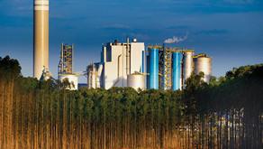 Suzano firma empréstimo de US$ 1,5 bilhão vinculado a metas sustentáveis