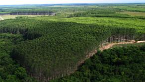 Suzano pretende captar recursos por meio de bônus ambiental