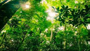 Indústria defende aprovação de Projeto de Lei que amplia segurança jurídica na área ambiental