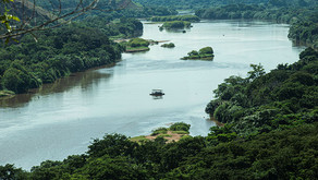 CENIBRA celebra Dia Mundial da Água