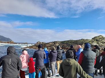 Doubtful seals.jpg