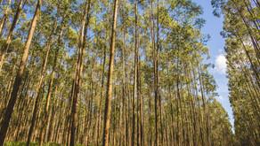 Smurfit Kappa atualiza o programa Better Planet 2050 com metas mais ousadas de diversidade ambiental