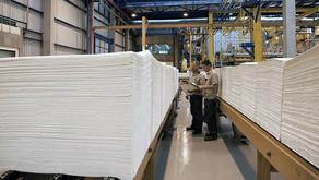 Produção de celulose atinge o segundo maior volume anual da história em 2020