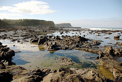 640px-Petrified_forest_at_Curio_Bay.jpg