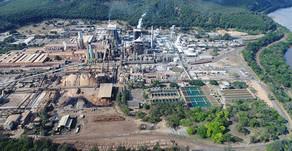 Com mercado de tissue aquecido, Cenibra investe R$ 552 milhões