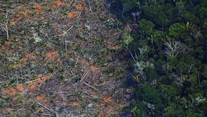 Executivos alertam para riscos da crise ambiental ao mercado de papel e celulose