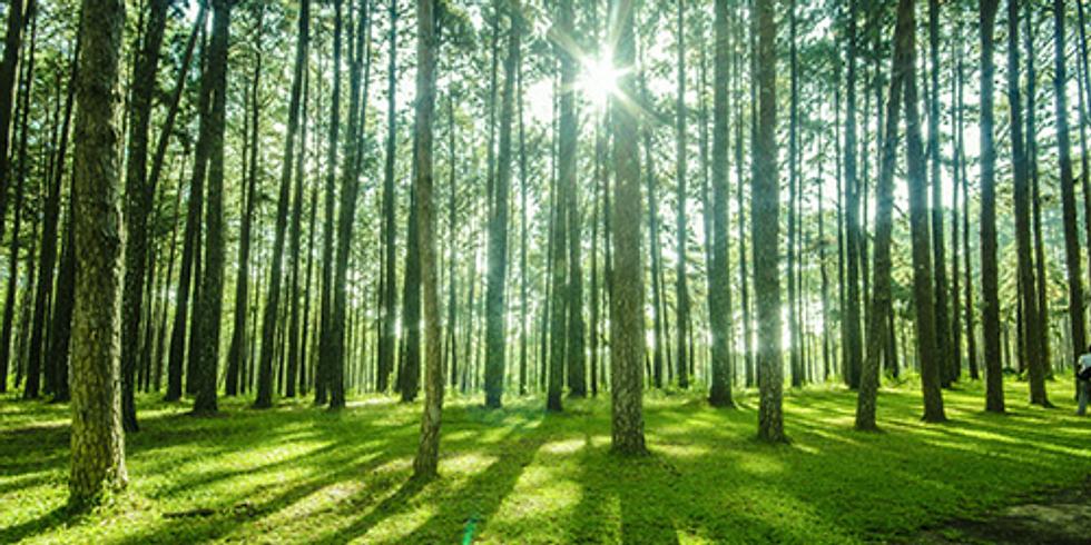 Curso Básico da Floresta ao Produto Acabado - Plataforma Online | ABTCP