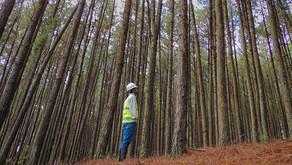 Setor florestal aumenta fabricação matéria-prima e produtos para itens essenciais durante pandemia
