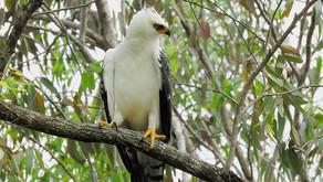 Monitoramento ambiental da CENIBRA garante riqueza de espécies
