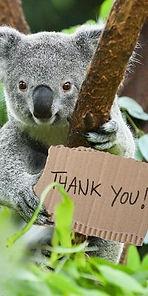 Koala Thank You3.jpg