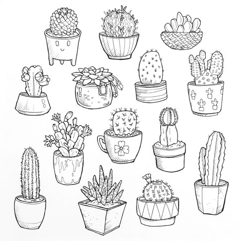 collection-cactuses.jpg