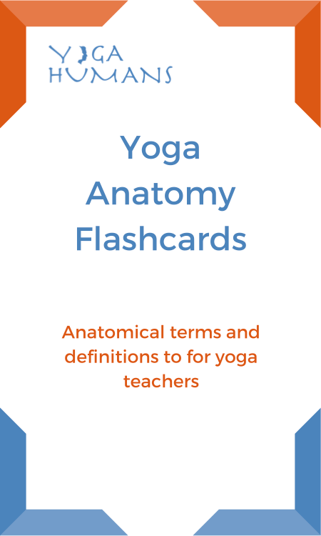 Yoga Anatomy Flash Cards