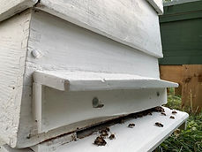 White Hives.jpg