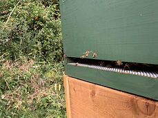 Bees going into hive.jpg