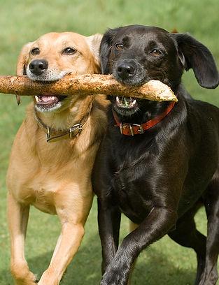 DogStickSmall.jpg