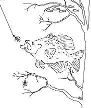crappie fish 001.jpg