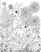 bunnies 001.jpg